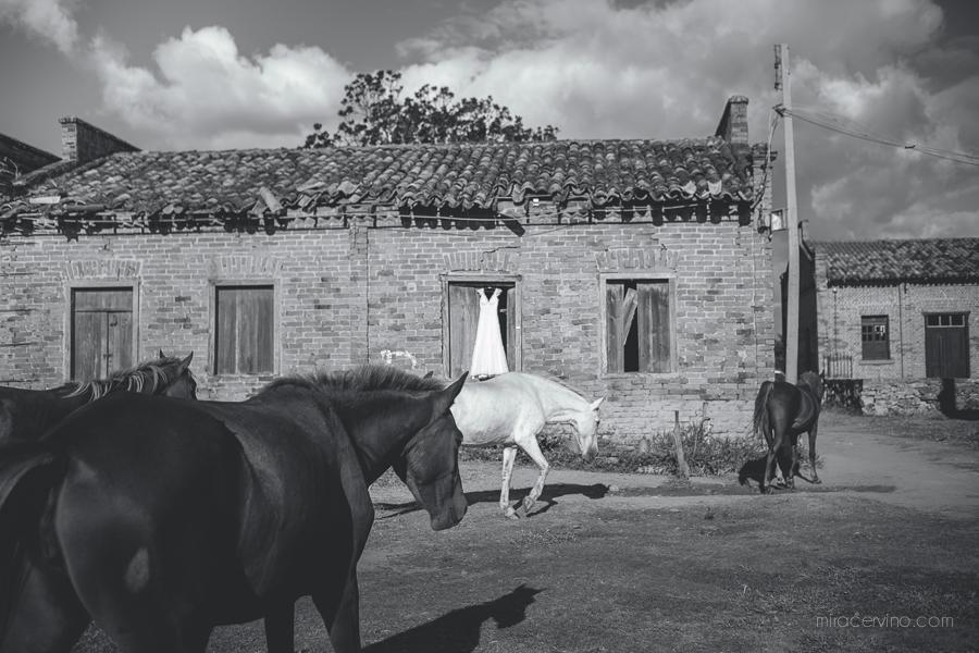 bruna e gabriel_miracervino-3