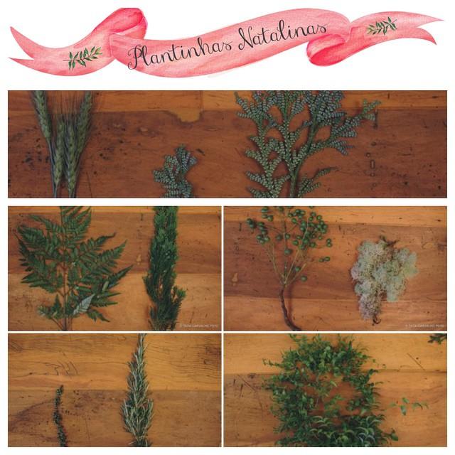 Somos apaixonadas por flores e plantas! Dão vida à decoração, à casa... Amamos! Quando conversei com a @glaumiranda sobre a nossa produção de natal, falei assim: