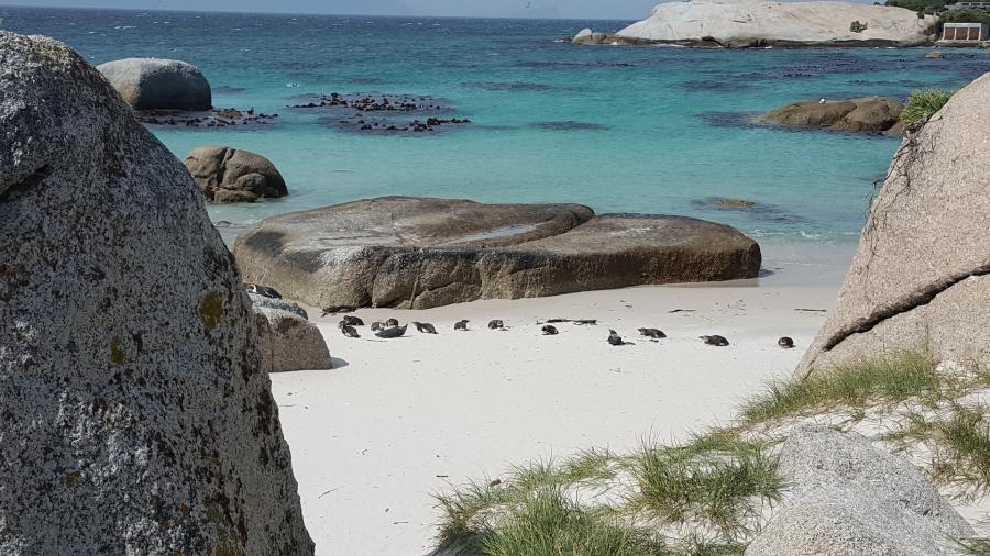 Dica de Lua de Mel – África do Sul e Mauritius