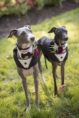 cachorro-pet-levando-alianças-de-casamento (1)