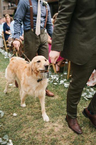 cachorro-pet-levando-alianças-de-casamento (2)