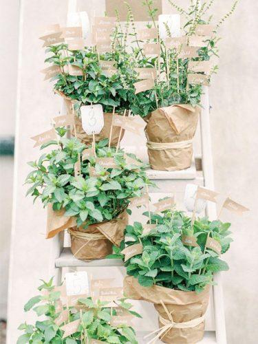lembrancinha-casamento-ervas-vaso
