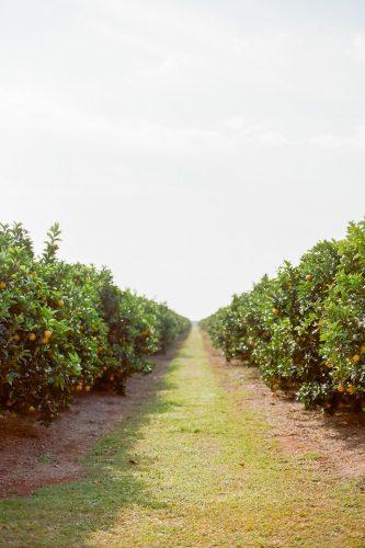 casamento-fazenda-no-laranjal (21)
